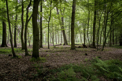 Hambach Forest  - a forensic inventory