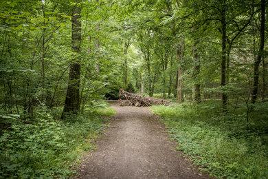 Hambacher Forst - Wald gegen Kohle SERIE40