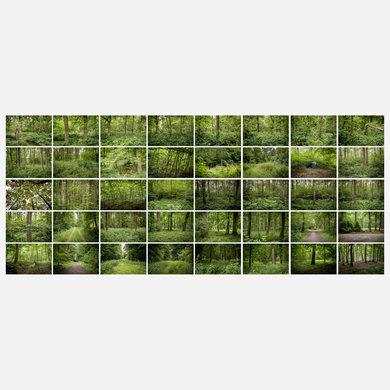 2015 0619 Hambacher Forst Bestandsaufnahme SERIE40 Kontaktabzug IG-02